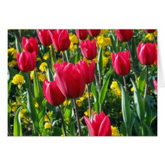 Carte tulipes et primevère
