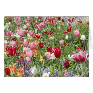 Carte Tulipes, jardin national de cathédrale