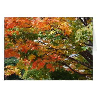 Carte Un beau jour d'automne à Salem, mA