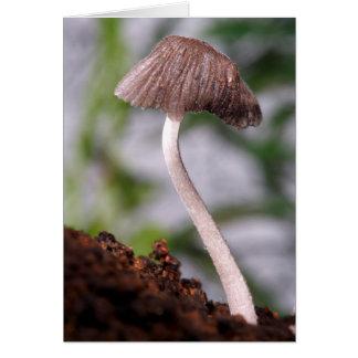 Carte Un champignon
