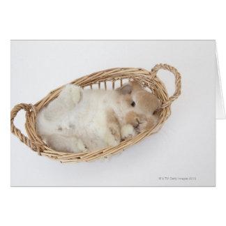 Carte Un lapin est dans un panier. La Hollande Lop.