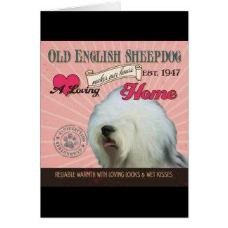 Carte Un vieux chien de berger anglais affectueux fait