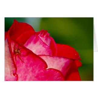 Carte Une araignée avec un rose