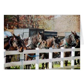 Carte Une ligne des chevaux amish