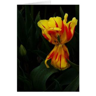 Carte Une tulipe pour vous