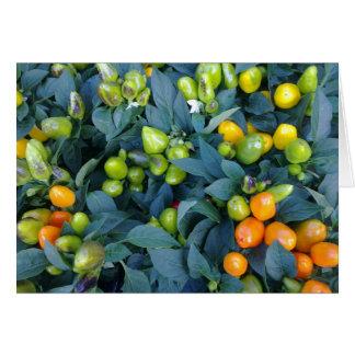 Carte Usine de piments