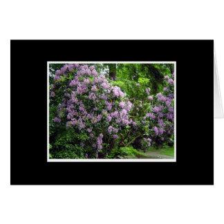 Carte Verger de rhododendron