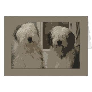Carte Vieux chiens de berger anglais