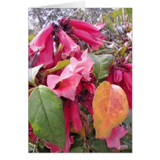 Carte Vigne de trompette rose