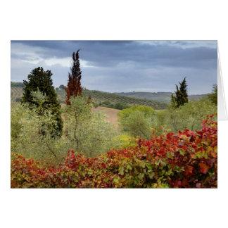Carte Vignoble près de Montalcino, Toscane, Italie