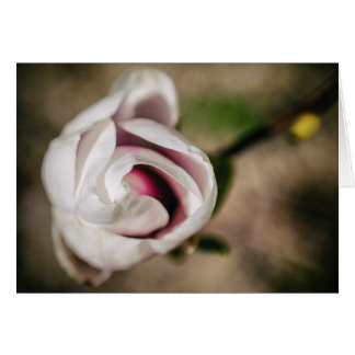 Carte Vintage magnolia