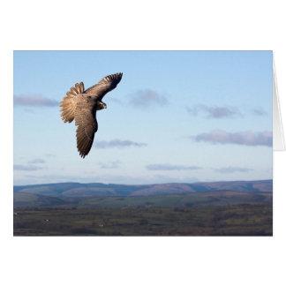 Carte Vol de faucon