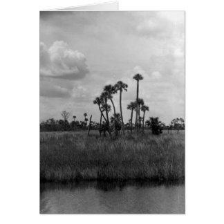 Carte Vue de marais, marais de la Floride, juillet 1962