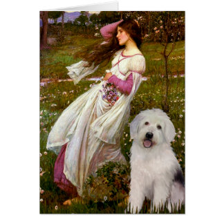 Carte Windflowers - vieux chiot anglais 11
