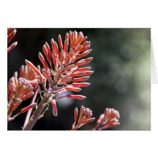 Carte yucca de colibri