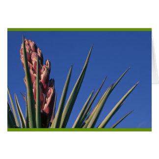 Carte Yucca de floraison