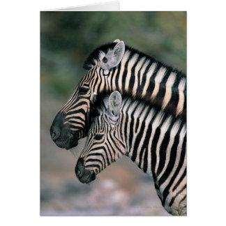 Carte Zèbre (burchelli d'Equus), parc national d'Etosha,