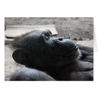 Carte Zoo de Houston