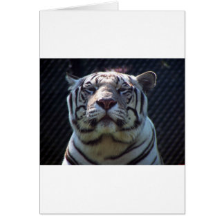 Carte Zoo de Philadephia
