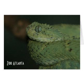 Carte Zoo vert Atlanta de vipère