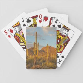 Cartes À Jouer Cactus de Saguaro au coucher du soleil, Arizona