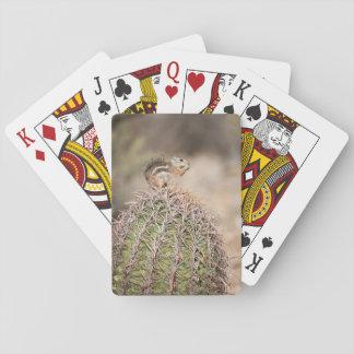 Cartes À Jouer Écureuil sur le cactus de baril