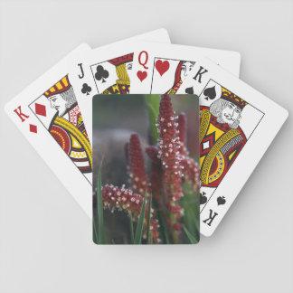 Cartes À Jouer Fleurs rouges lumineuses de montagne