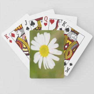 Cartes À Jouer Marguerite des prés