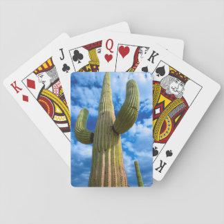 Cartes À Jouer Portrait de cactus de Saguaro, Arizona