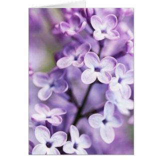 Cartes de note lilas