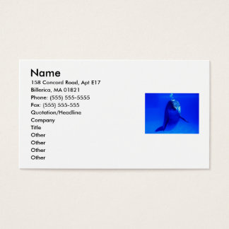 Cartes De Visite Affaires de dauphin