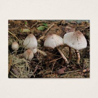 Cartes De Visite ATC de ~ de mélange de champignon
