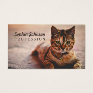 Cartes De Visite Jeune animal familier mignon de Kitty de chaton de