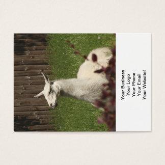 Cartes De Visite Lama blanc