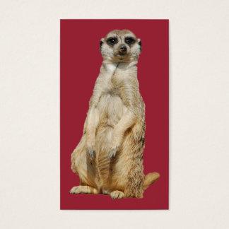 Cartes De Visite Meerkat