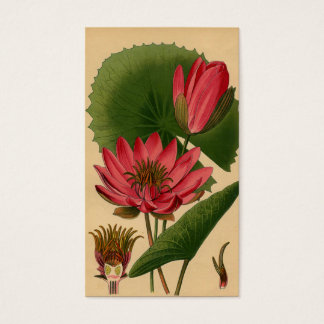 Cartes De Visite Nénuphar botanique vintage Lotus de rose
