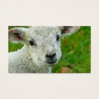 Cartes De Visite Petit agneau blanc