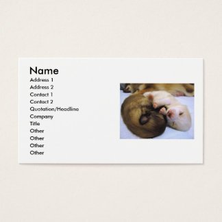 Cartes De Visite Pomeranians