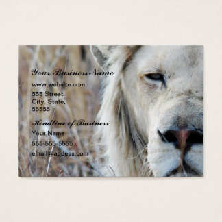 Cartes De Visite Repos blanc africain de lion