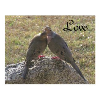 Cartes postales d'amour d'oiseaux de colombes de