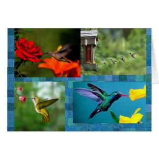 cartes pour notes de colibris