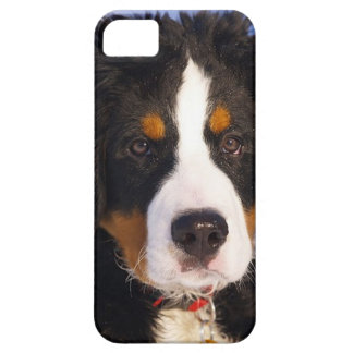 Cas de l'iPhone 5 de chiot de chien de montagne de Coque Case-Mate iPhone 5