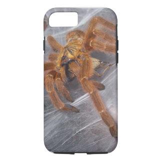Cas de téléphone de murinus de Pterinochilus Coque iPhone 7