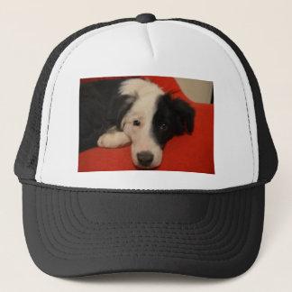 Casquette chien de border collie