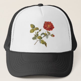 Casquette Cru rose de belle antiquité rouge de Rosa Gallica