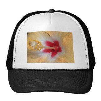 Casquette de fleur de ketmie
