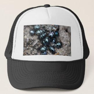 Casquette Le stercorosus d'Anoplotrupes de scarabées de