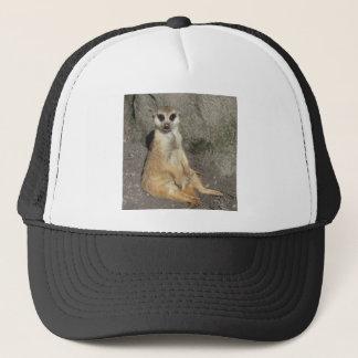 Casquette Meerkat