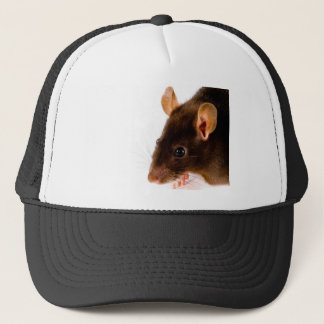 Casquette Rat de Brown