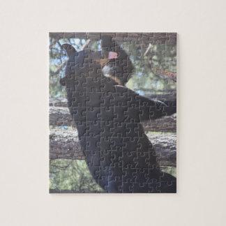 Casse-tête d'ours noir puzzle
